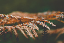 A Macroshot Of A Fern From The...