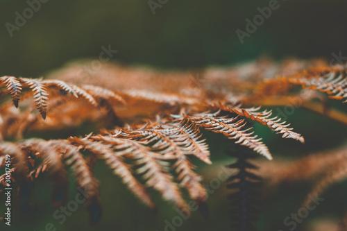 Obraz na plátně A macroshot of a fern from the side