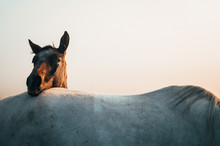 Two Horses, Black And White Horse, Animals Life, White Edit Space