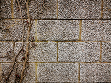 A Wall With Dry Ivy Background