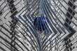 Whirligig closeup