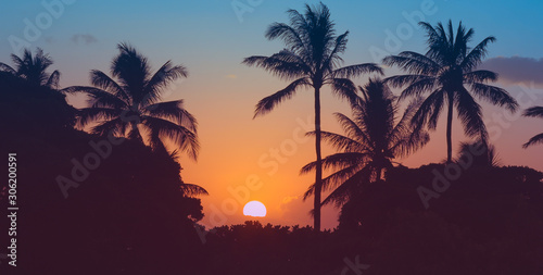 Beautiful tropical sunset and palm trees Canvas Print