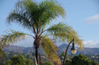 High view of the crown of a palm tree and a street light lantern with a mountain ridge under blue sky in the background