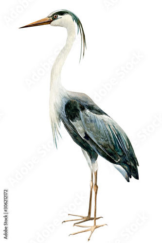 Fotografía heron birds on isolated white background, watercolor illustration