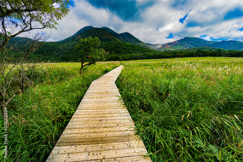 湿地帯の遊歩道
