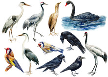 Set Of Birds, Watercolor Illustration, Collection Of Wild Birds On Isolated White Background, Heron, Crane, Black Swan, Bittern, Goldfinch, Crow