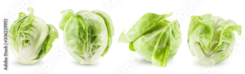 Garden Poster Brussels collection of brussels sprouts isolated on a white background