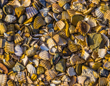 Pattern Of Crushed Seashells A...