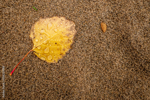 Yellow leaf on sandy beach texture background