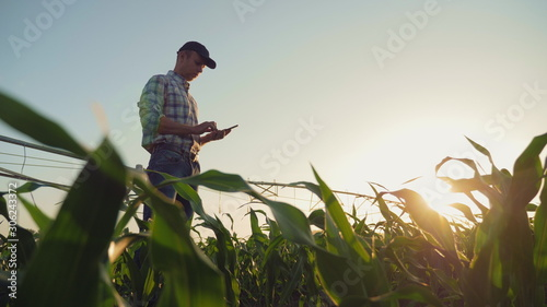 Young farmer working in a cornfield, inspecting and tuning irrigation center pivot sprinkler system on smartphone Fototapeta