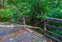 Tree Crashed Through Railing O...