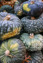 Fall Scene:  Colorful Gourds A...