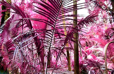 Fototapeta Las Beautiful fantasy infrared shots of palm trees on the seychelles islands