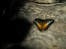A Black And Orange Butterfly S...
