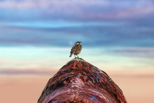 A Single Solitary Bird Perched...