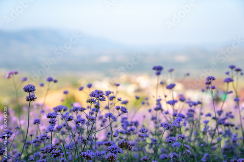 Closeup image of Violet flower nature abstract background for quotes with copy space for text and banner, soft focus.