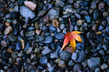 小石川後楽園の美しい...