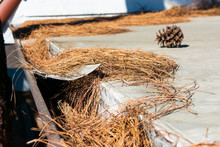 Roof Gutter Clogged With Leaves, Pine Needles And Debris. Damaged Plastic Mesh Gutter Guard And Leaf Screen. Rain Gutter Inspection, Cleaning And Maintenance Is Required To Prevent Clogged Gutters.