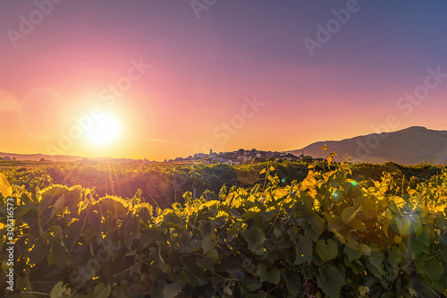 Scenic view of vineyard and Lumbarda village at sunset Fototapet