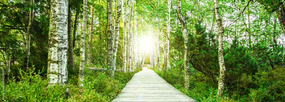 Fototapeta Wooden footbridge in the green birch forest in the Black Forest in the evening with setting sun