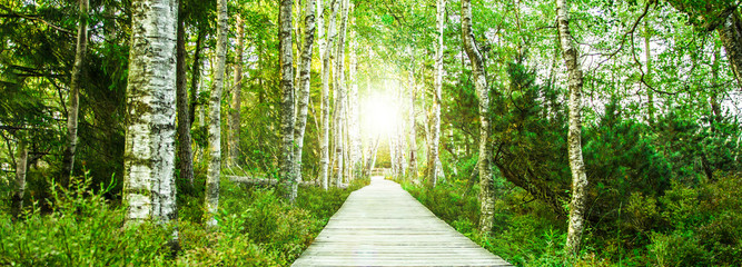 Fototapeta Optyczne powiększenie Wooden footbridge in the green birch forest in the Black Forest in the evening with setting sun