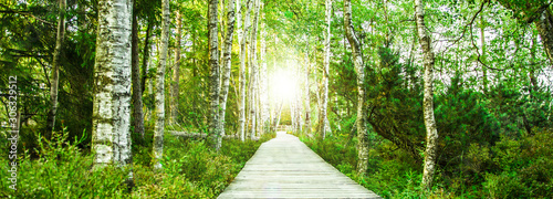 Canvas-taulu Wooden footbridge in the green birch forest in the Black Forest in the evening w