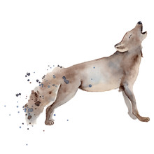 Watercolor Wolf Illustration Wild Forest Animal