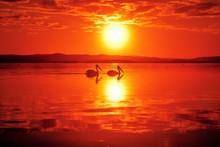 Beautiful Shot Of Two Seabirds Enjoying The Breathtaking Sunset Reflecting In The Sea
