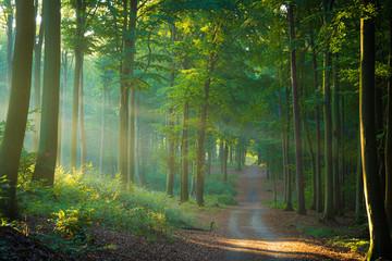 Die Sonne scheint durch Nebel auf den Weg im Wald