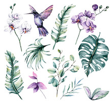 Set With Watercolor Hummingbir...