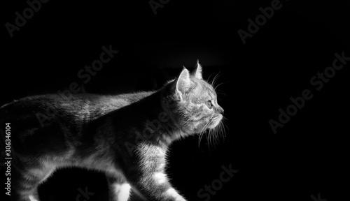 Obraz black and white photo of a kitten walking towards a light - fototapety do salonu