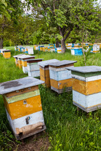 Wooden Beehives In The Apiary