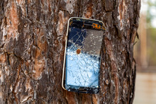 The Mobile Phone Nailed To The Tree