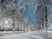 The Snow Alley Of The City Par...