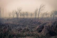 Pasto Ondulante Con árboles A...