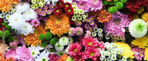 Obraz na plátně Flowers wall background with amazing red,orange,pink,purple,green and white chry