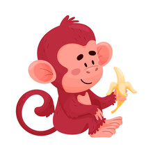Funny Little Red Monkey Eating...