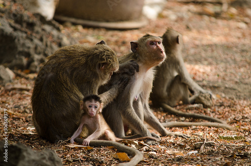 Photo  Monkey family with baby