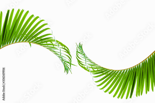 Papier Peint - tropical and coconut leaf isolated on white background, summer background