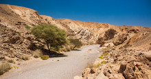 Negev Israeli Desert Canyon Warming Scenery Landscape Photography With Narrow Passage Between Sand Stone Rocks And Lonely Tree In Summer Time Hot Weather