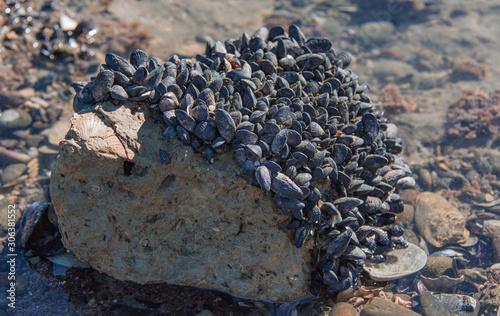 Papel de parede  Barbas, adhesion a las rocas