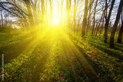 Foto auf Leinwand Gelb beautiful summer forest glade at the sunset, outdoor background