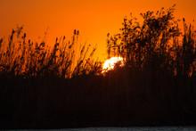 Sunset At Chobe Riverfront, Botswana, Africa
