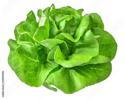 Leinwand Poster Green butterhead lettuce vegetable salad isolated on white background