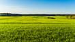 Landschaft mit grünen Feldern und Wald im Frühling
