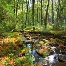 Small Stream In A Green Decidu...