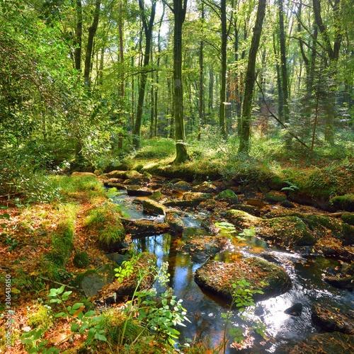 Obraz Small stream in a green deciduous forest - fototapety do salonu