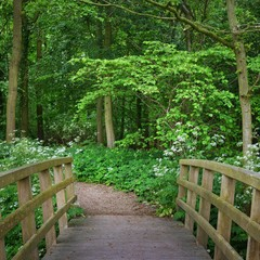 Fototapeta Otwarte okna Walkway and a bridge in Stochemhoeve forest park in the Netherlands