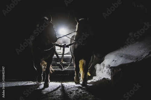 Outline of two horses and a vintage sled, being backlight by a reflector on the sled Canvas Print