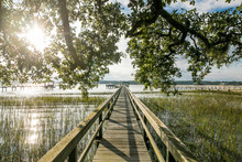 Beautiful Dock With Overhanging Trees Going To Onto Water At Sunset